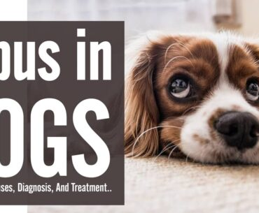 Lupus in dogs